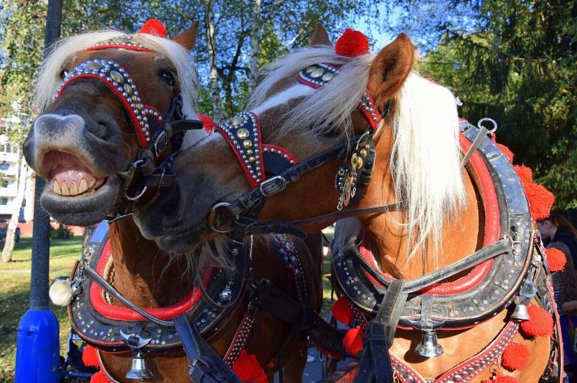 c96beedce Pohľad na Deň rodiny z konského sedla ::: Aktuality a oznamy ...